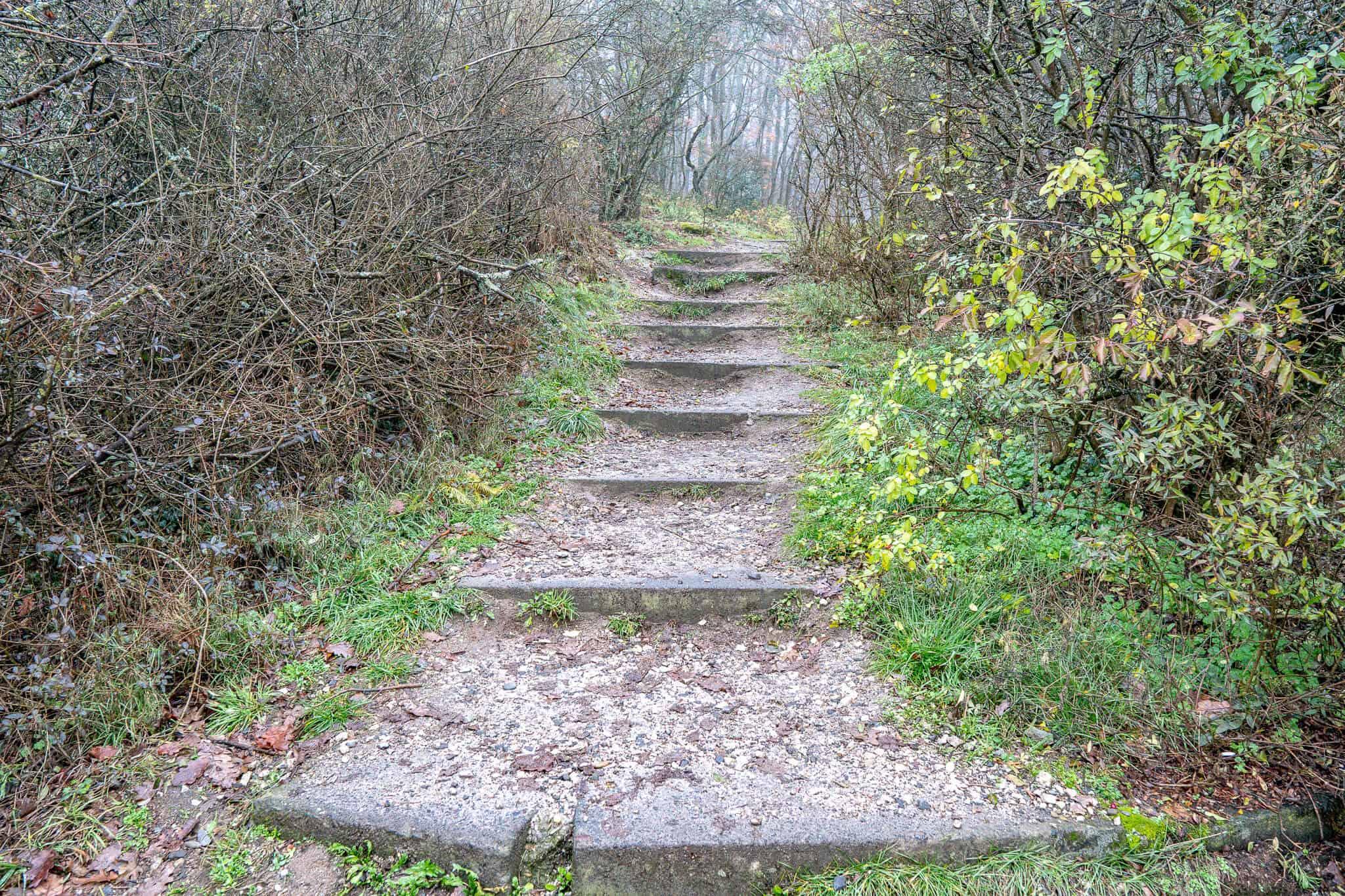 Hildablick Treppe nach oben