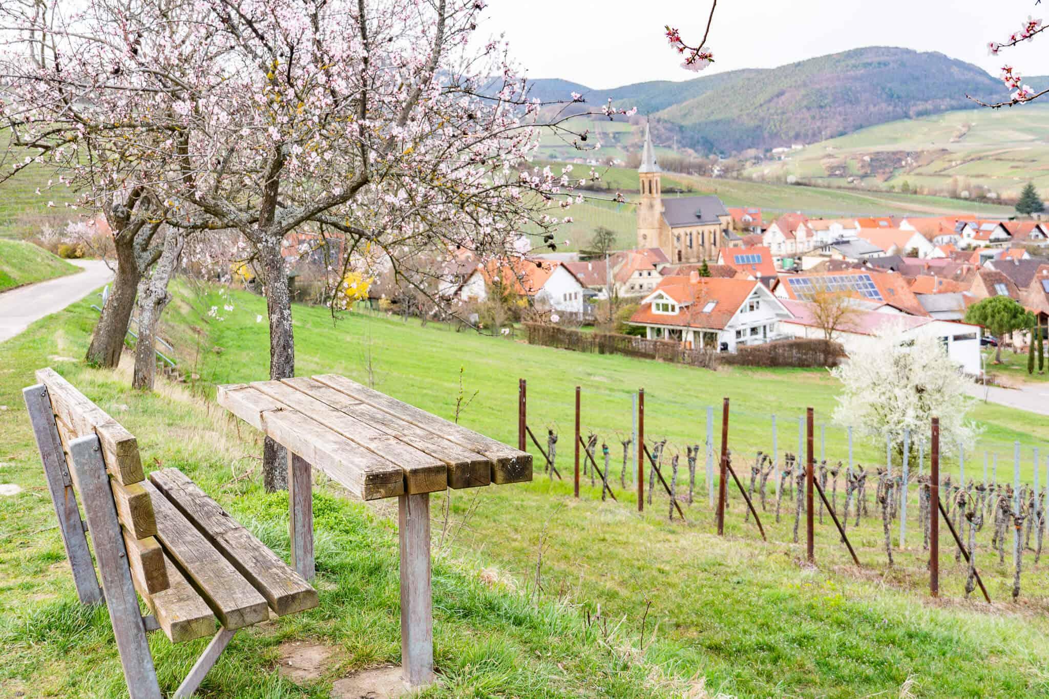 Blick auf Birkweiler zur Mandelblüte