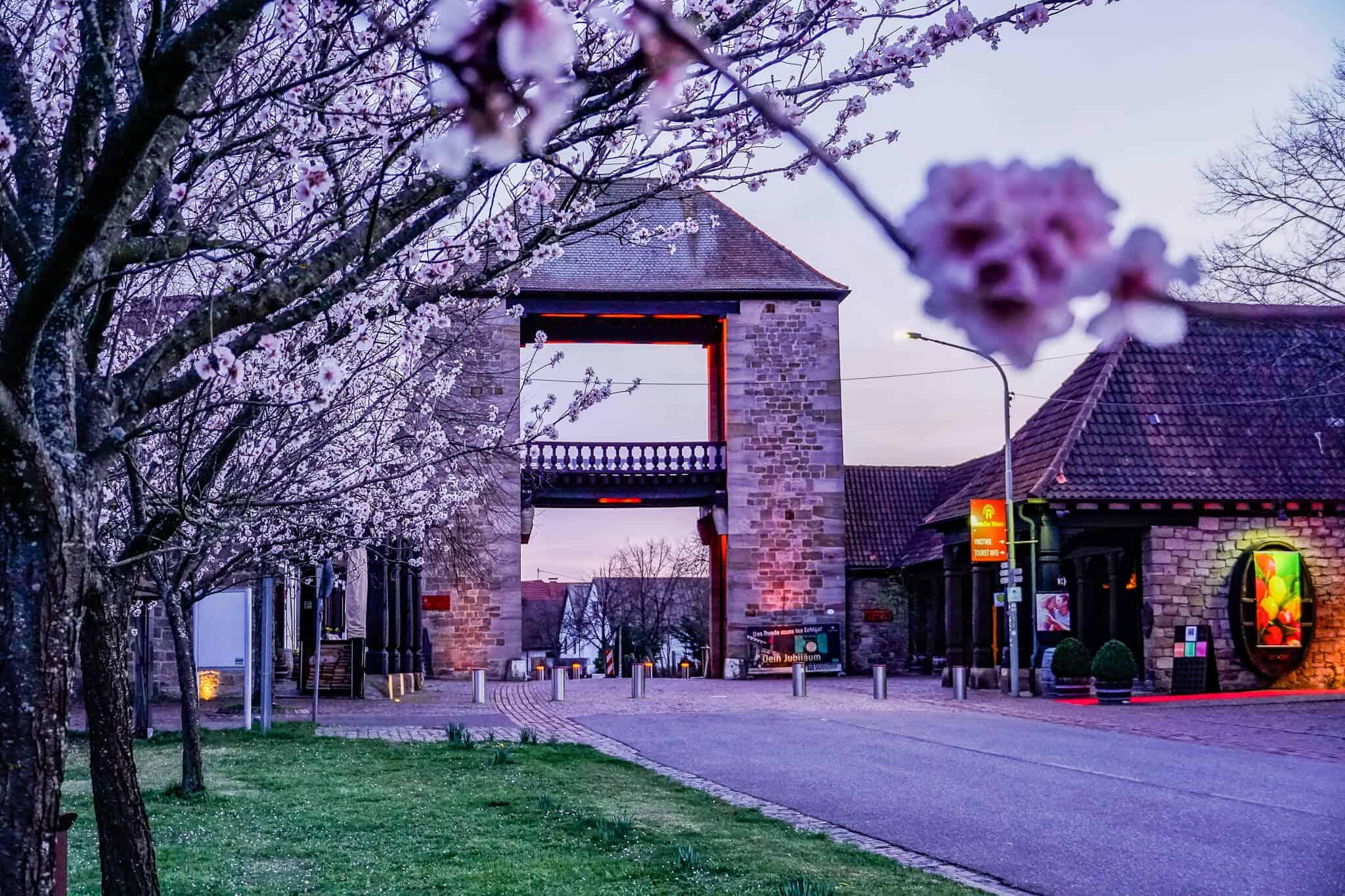 Deutsches Weintor zur Mandelblüte mit Rosa Leuchten