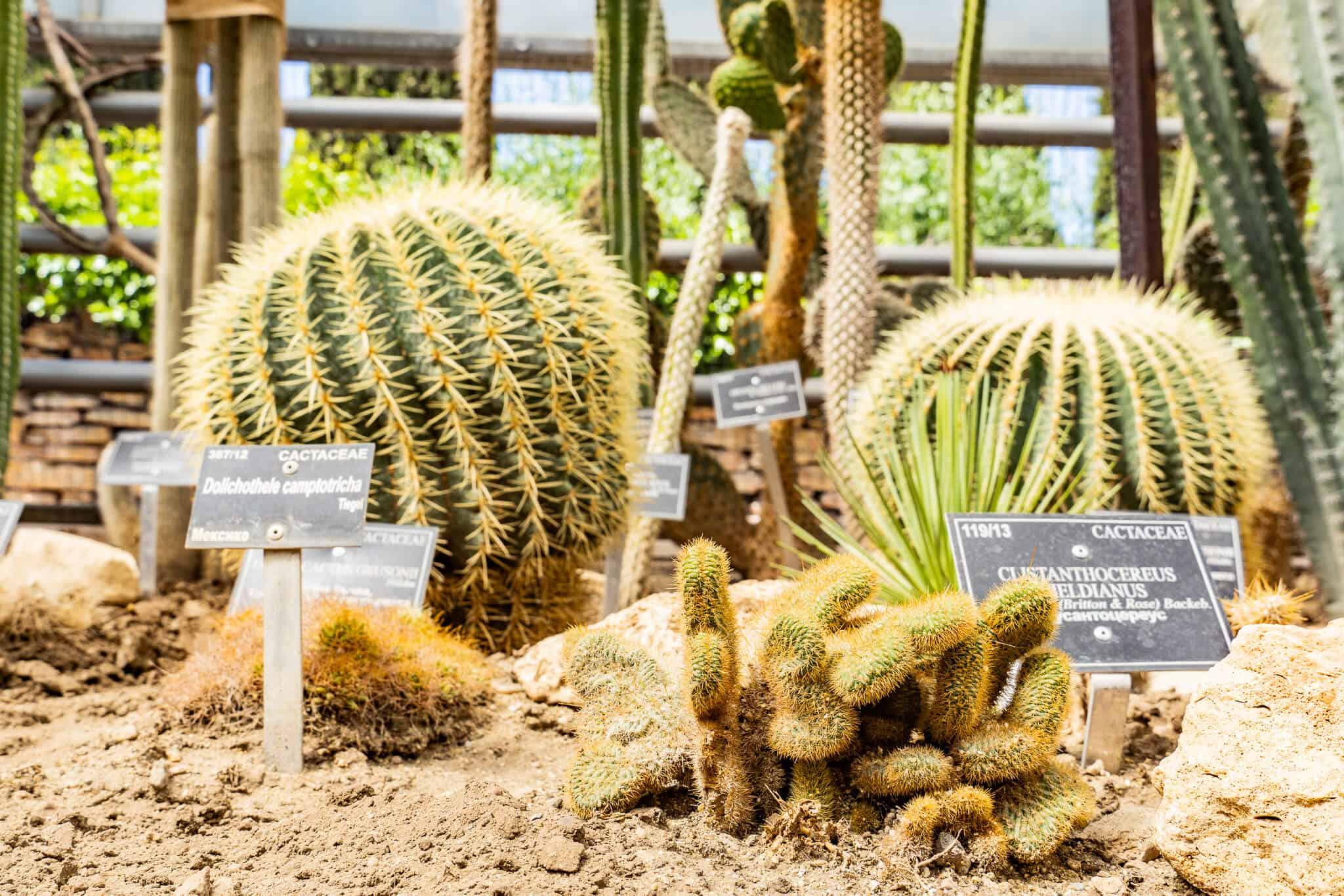 Kakteen und Sukulenten im botanischen Garten Balchik