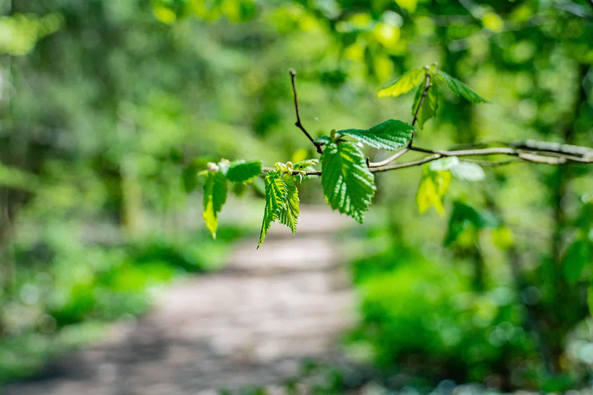 Im Wald in Kelkheim